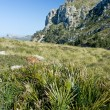 Landscape from Mallorca — Stock Photo