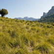 Landscape from Mallorca - Stock Photo