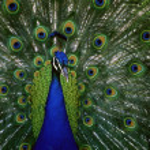 Birds of the World — Stock Photo