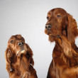 Dog emotions — Foto Stock