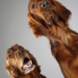 Dog emotions — Stok fotoğraf