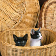 Lovely pets — Stockfoto