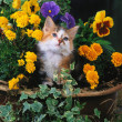 Foto Stock: Lovely pets