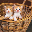 Stockfoto: Lovely pets