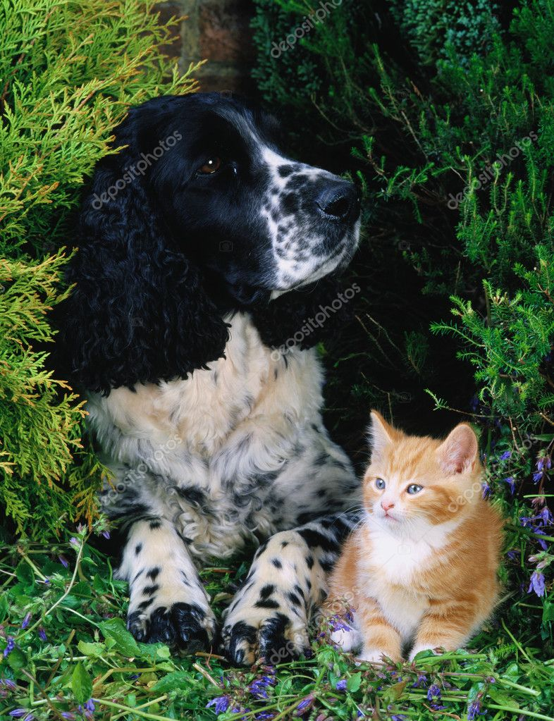 Lovely pets   Stockfoto #1906390