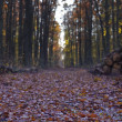 road  in  wald — Stockfoto