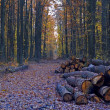 Road in forest — Stock Photo #2000524