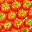 Many tomatoes — Stock Photo