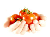 Tomatoes in the hands — Stock Photo