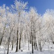 Winter trees — Stock Photo #1897165