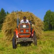 Royalty-Free Stock Photo: Haymaking in Siberia 4