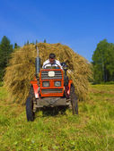 Haymaking in Siberia 4 — Stock Photo