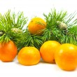 Branches of a pine and tangerines — Stock Photo #1899357