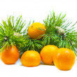 Branches of a pine and tangerines — Stock Photo #1899367