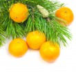 Branches of a pine and tangerines - Stock Photo