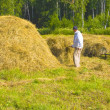 Stock Photo: Haymaking in Siberia
