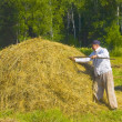 Haymaking in Siberia 20 — Stock Photo