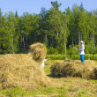 Royalty-Free Stock Photo: Haymaking in Siberia 19