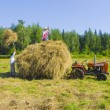 Royalty-Free Stock Photo: Haymaking in Siberia 15