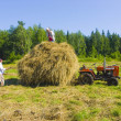 Haymaking in Siberia — Stock Photo
