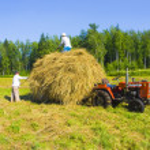 Haymaking in Siberia — Stock Photo