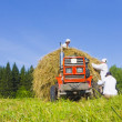 Haymaking in Siberia 8 — Stock Photo