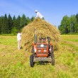 Haymaking in Siberia 10 — Stock Photo