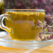 Curative tea with origanum - Stock Photo