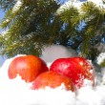 Apples in snow — Stock Photo #1899928