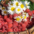camomiles and a raspberry — Stock Photo