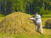 Haymaking in Siberia 20 — Stock Photo