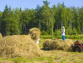 Haymaking in Siberia 19 — Stock Photo