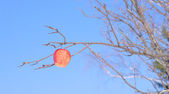 Jablko na větvi — Stock fotografie