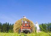 Haymaking in Siberia 9 — Stock Photo
