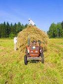 Haymaking in Siberia 10 — Stock Photo