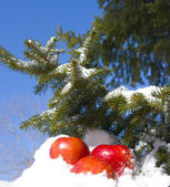 Manzanas en la nieve — Foto de Stock