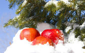 Apples in snow — Stock Photo