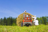 Haymaking in Siberia 8 — Stock Photo
