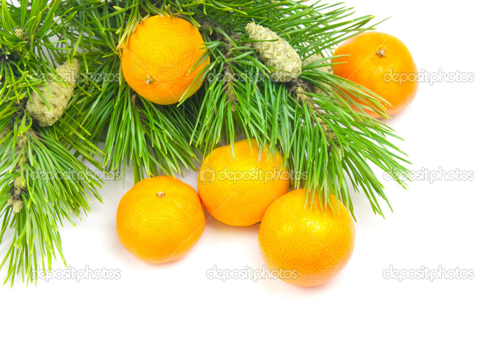 Branches of a pine and tangerines on a white background — Stock Photo #1899384