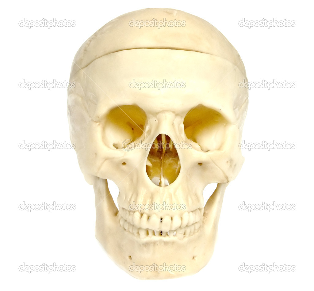 The image of a skull of the person on a homogeneous background — Foto de Stock   #1899490