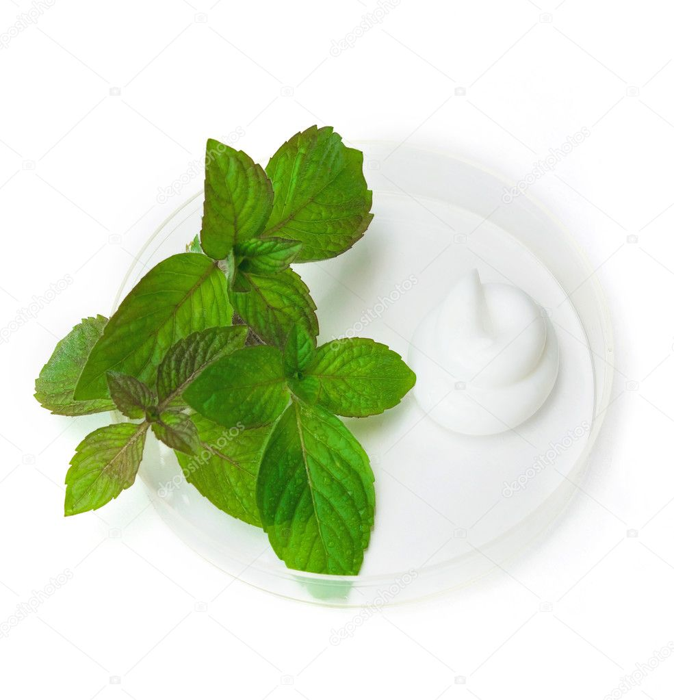 The cream and herb image in a glass saucer — Stock Photo #1899647
