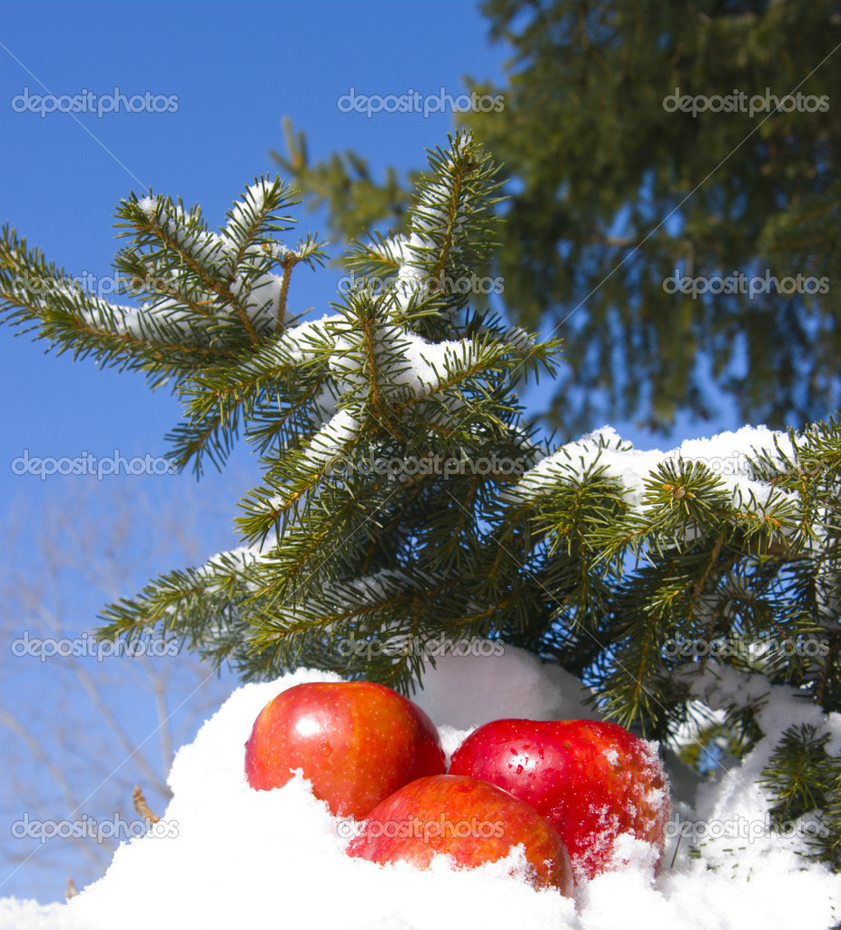 Apples in snow against the sky and a fur-tree branch — Stock Photo #1899652