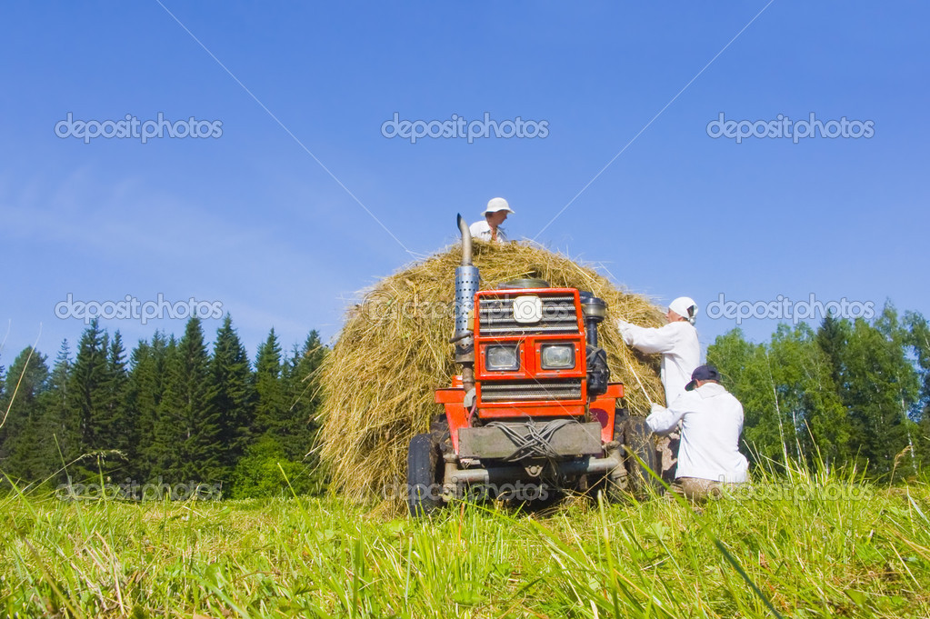 The image of preparation of hay peasants in Siberia — Stock Photo #1899982