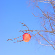 Apple on a branch — Stock Photo #1900005