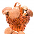Wattled basket with ceps — Stock Photo