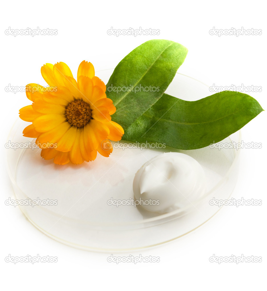 The cream and herb image in a glass saucer — Stock Photo #1900014