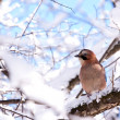 Stock Photo: Eurasijay