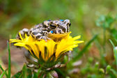 Frog on the flower — Stock Photo