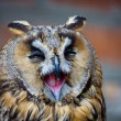 owl — Stock Photo #1858091
