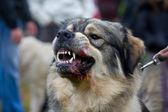 Köpek — Stok fotoğraf